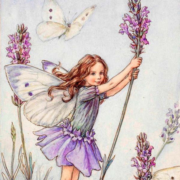 Lavender & Butterfly Flower Fairy Tea in South Jersey